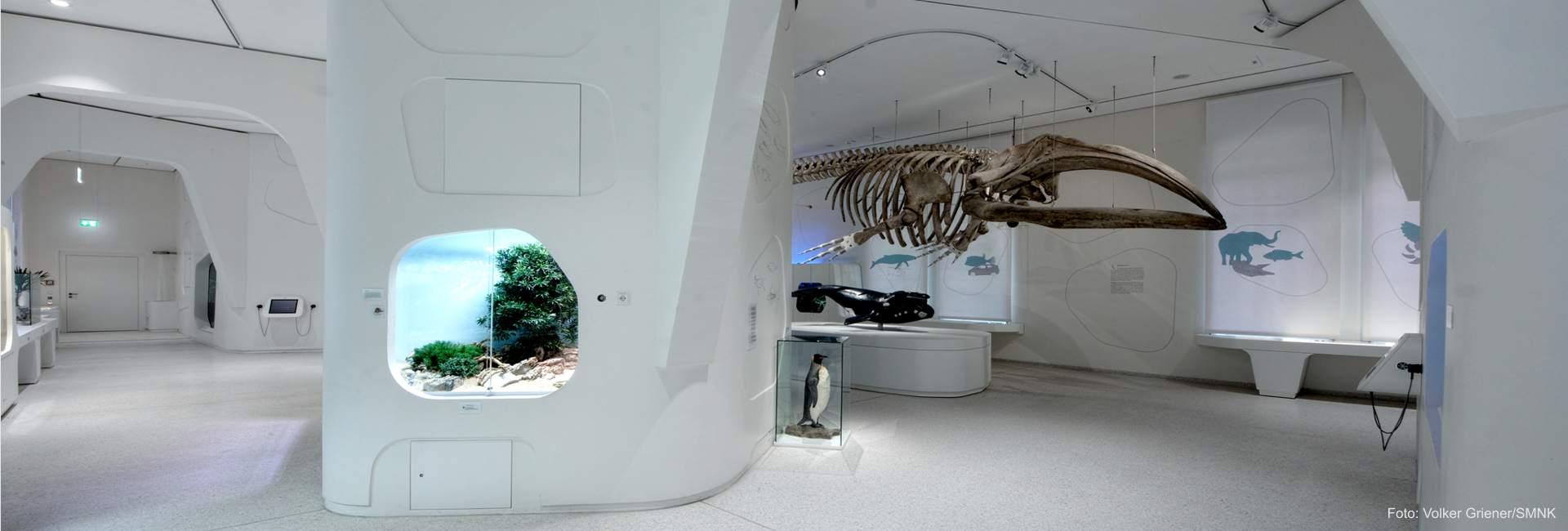 Museum-Showcases for the Natural Science Museum Karlsruhe
